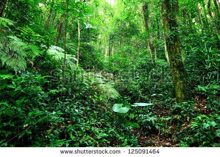 stock-photo-jungle-125091464.jpg